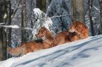 2013-02-3_schmid_stefanie_alles_im_blick