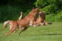 2013-06-steffi-schmidt-hunde