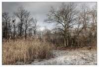 2013-11-renate-braun-altrhein