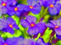 2014-03-guenter-nock-fruelingsblumen