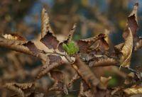 2-2015-10-klaus-standke-gruenes-blatt