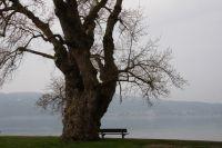 2. Platz Einsamkeit
