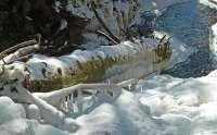 2014-01-wolfgang-arbogast-eiszapfenstamm