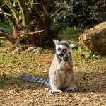 15_Zoo_Cotswolds_Animal_Park_GB